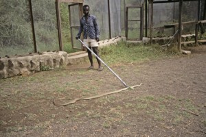 A black mamba. I write about a snake like this on pages 46-47