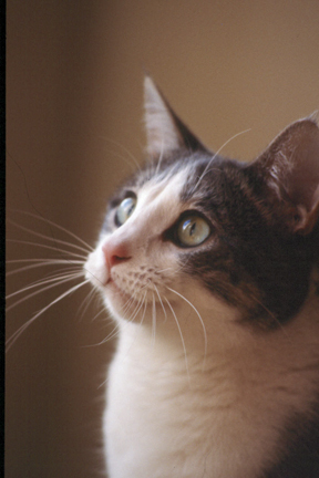 Cats make a large number of sounds, not just meow, page 204