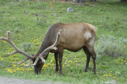 I talk about Elk on pages 185-186, 200-201